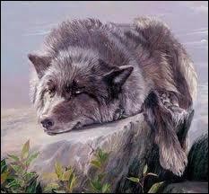 Qui a écrit La mort du Loup ?