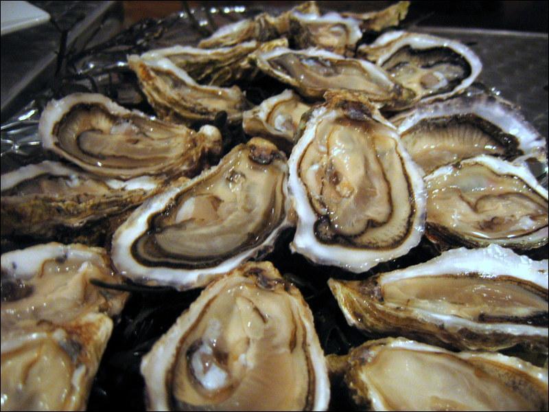 Les huîtres laiteuses sont grasses :