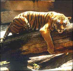 Demain, ____ visiterons le zoo.