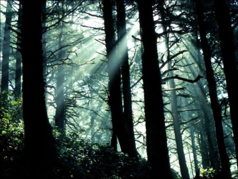 ____ suis allé en forêt.