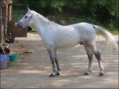S'agit-il d'un cheval blanc