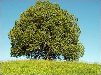 En ce moment, les arbres ont encore des feuilles.