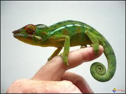 C'est un animal qui peut changer de couleur . C'est aussi la mascotte de Quizz.biz .