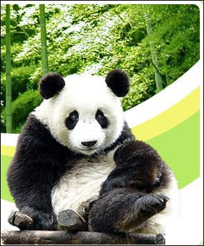 Quelle ville chinoise a pour emblème le panda ?