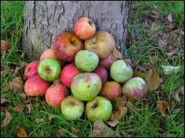 D'où vient le terme 'tomber dans les pommes' ?