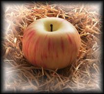 Quelle est cette pomme ?
