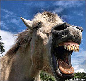 Ce cheval est...