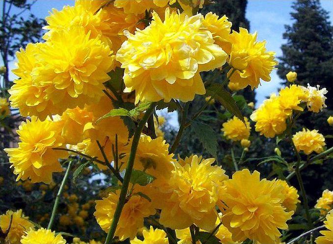 Fleurs pas très connues