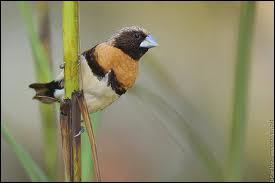 Egalement originaire d'Australie : quel est cet oiseau ?