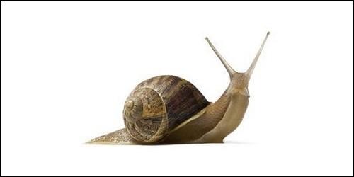 Le petit-gris est une espèce d'escargot. Quel est l'autre nom employé pour cet animal ?