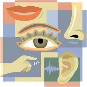 Les 5 sens sont la vue , l'odorat , l'ouie , le toucher et :