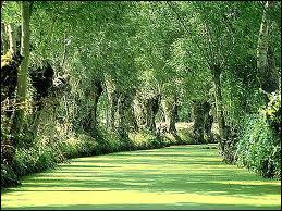 Quelle essence d'arbre est la plus présente dans ces lieux ?