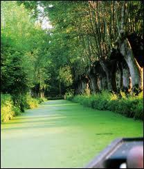 Comment sont appelés les canaux principaux qui sillonnent le marais ?