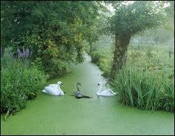L'assèchement de ces marais fut entrepris sous Henri IV par :