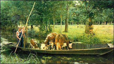 Comment se nomme l'embarcation servant de transport dans ce marais ?