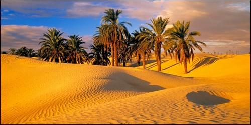 Quel est le plus vaste désert du monde ?