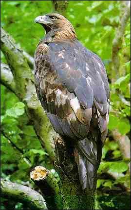 Si l'homme voyait comme cet oiseau il pourrait lire un livre à: