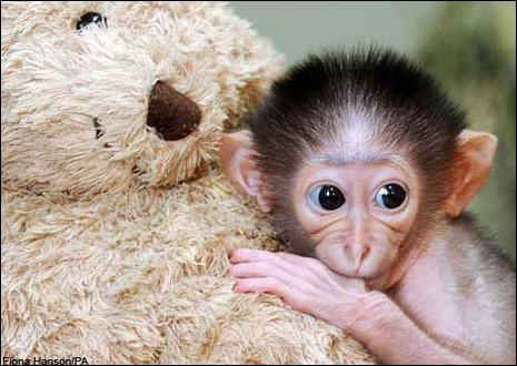 Avec quoi est le singe ?