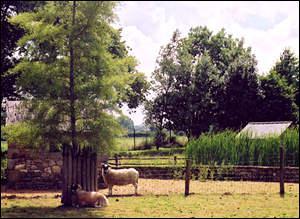 A Vasles, un parc animalier de 6 hectares , spécialisé dans les espèces ovines est ouvert depuis 15 ans. Il s'appelle...