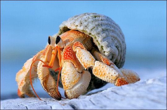 quizz sur les crustac 233 s quiz crustaces