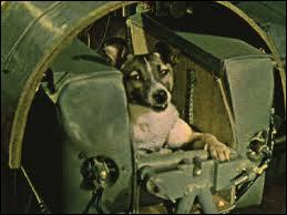 Le premier vol habité a lieu le 3 novembre 1957 avec la chienne appelée ?