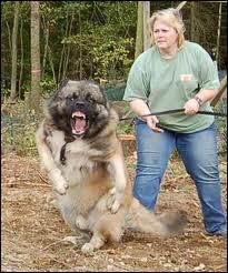 Si elle a du chien :