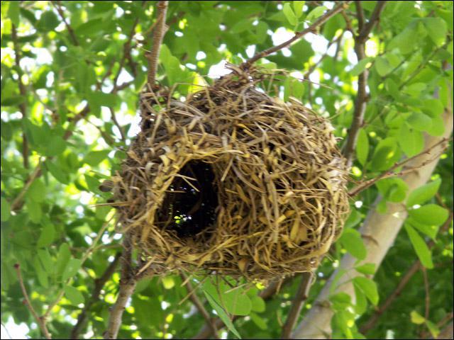 Quel artiste ! Mais il s'agit du nid de qui ?