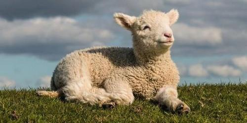 Rsultat de recherche dimages pour animal  ferme