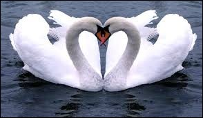 Le dé roule... 3 ! ... Sciences et Nature : Quel oiseau nage mais ne vole pas ?