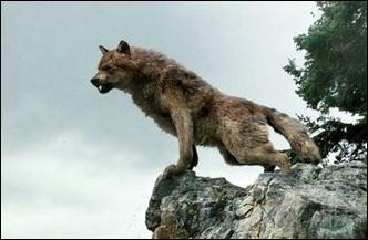 Qui n'est pas un loup garou ?