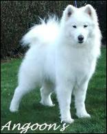 quizz nom d 39 un chien quiz races chiens races de chiens. Black Bedroom Furniture Sets. Home Design Ideas