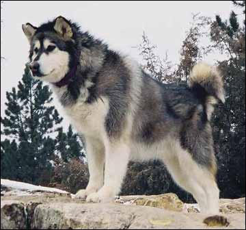 Quel est ce chien ?