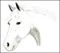 Un cheval qui a les oreilles en avant et l'encolure fléchie est :