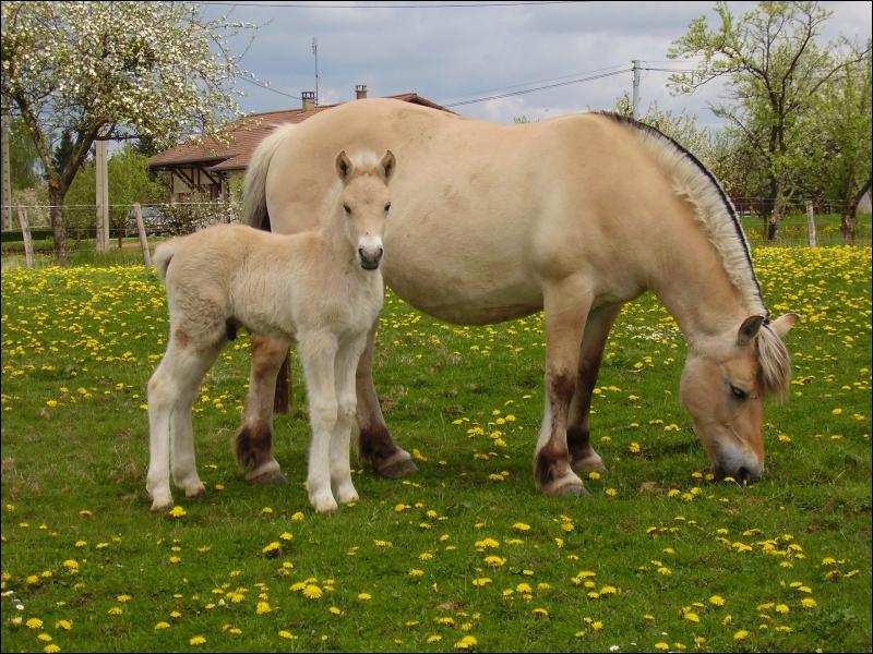 Le cheval est :