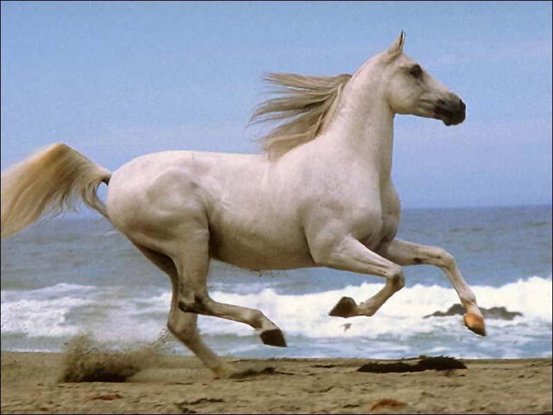 Quelles sont les 3 parties du corps du cheval ?