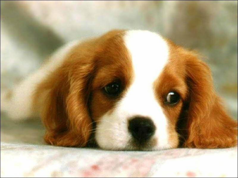 Complétez l'expression : 'Qui veut tuer son chien l'accuse de la ...