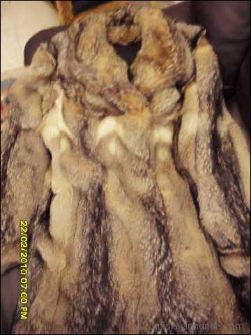 Le commerce de fourrure a tué des millions de renards. Combien de renards roux faut-il chasser pour un seul manteau de fourrure ?