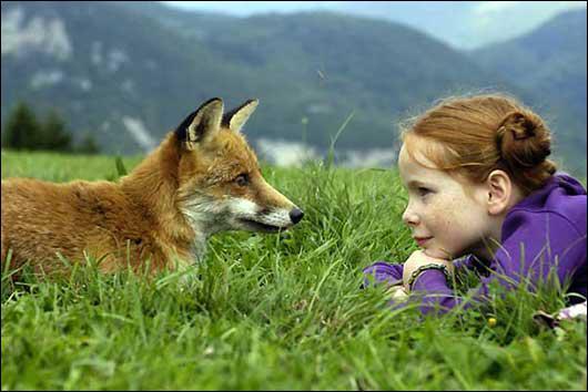Le renard roux est une espèce protégée en France.