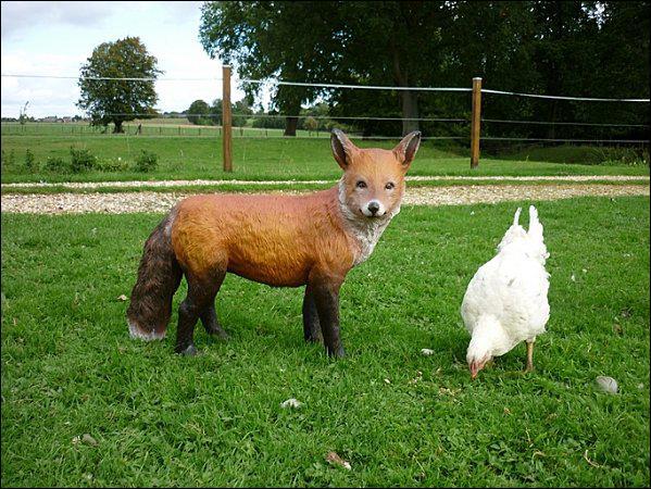 Quelle est l'alimentation du renard ?