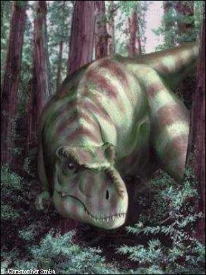 Par qui le T-Rex a-t-il été découvert ?