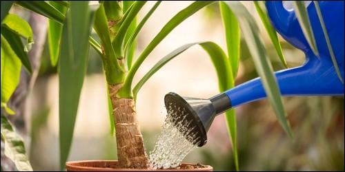 Quelle partie de la plante absorbe l'eau ?