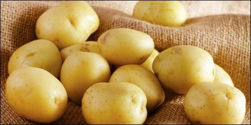 La pomme de terre est :