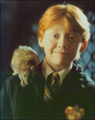Le rat de Ron est en vrai :