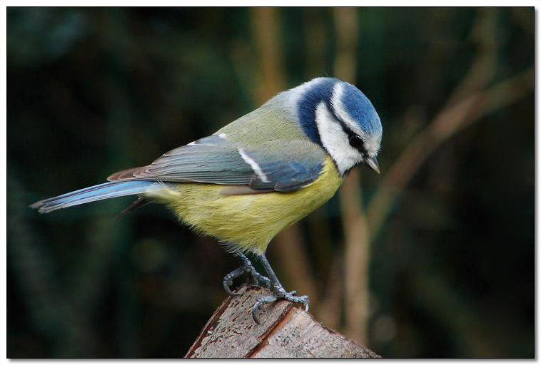 Les oiseaux sauvages