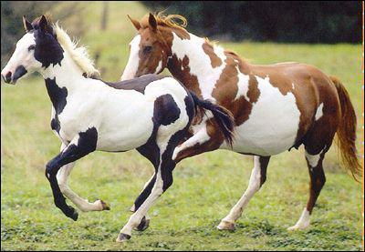 Quelle robe ce cheval a-t-il ?