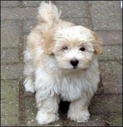 De quelle race est ce chien?