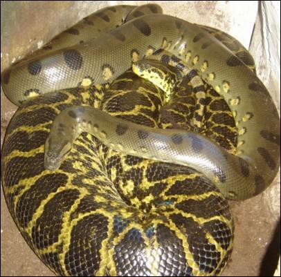 Combien d'espèces de serpents existent de nos jours ?
