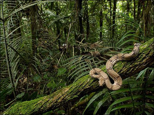 Sur quels continents vivent les serpents ?
