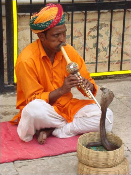 Pourquoi le cobra 'danse' devant le charmeur de serpents