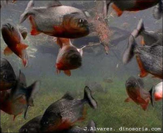L'eau de leur aquarium doit être de ... ?